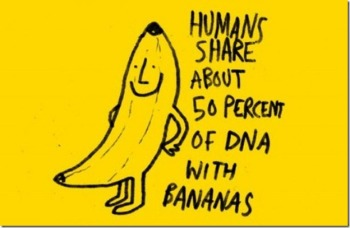 Image result for eating bananas at night