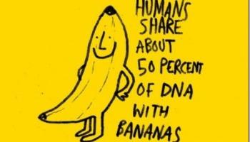 Image result for eating bananas at night